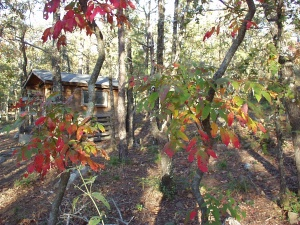 Sumac at the cabin