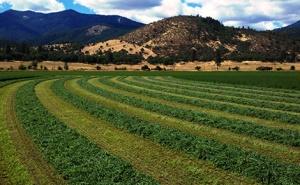 Alfalfa in mountains