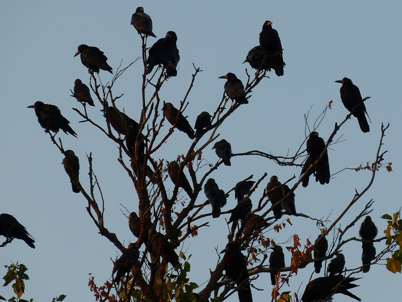 Image result for a murder of crows
